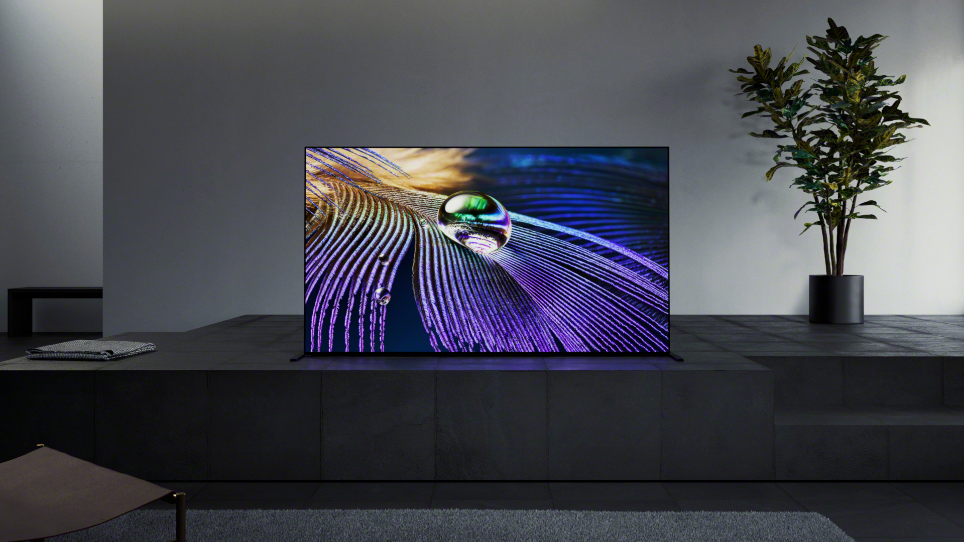 Sony OLED with purple screen